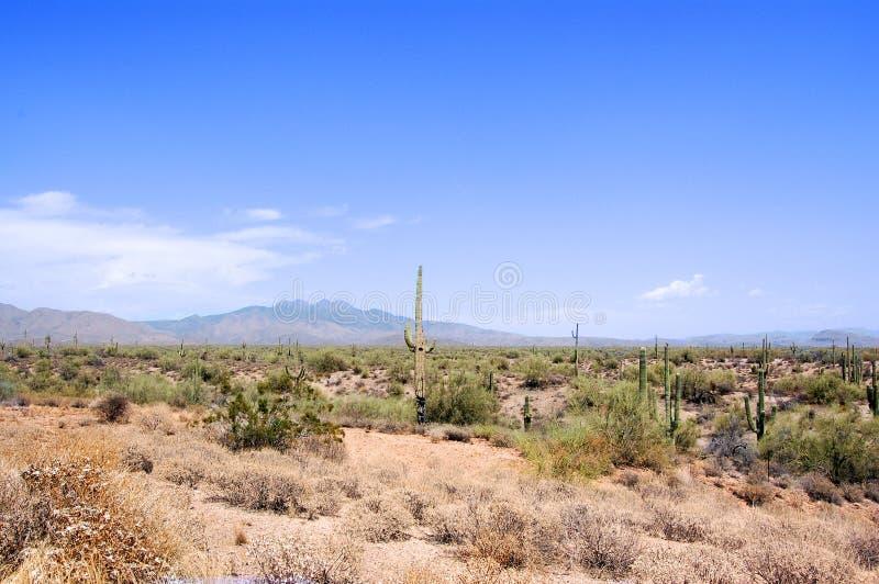 Arizona Desert. Clear shot of Four Peaks in the Arizona desert stock photography