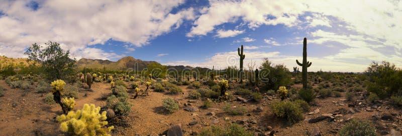 Arizona desert cactus and mountains panorama royalty free stock photos