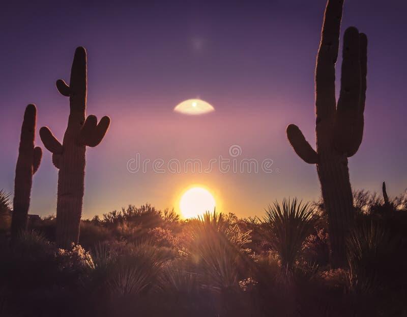 Arizona desert cactus tree landscape. With dramatic sky and morning sunrise stock photos