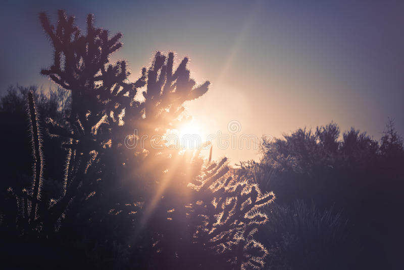 Arizona desert cactus tree landscape. With morning sunrise royalty free stock photos