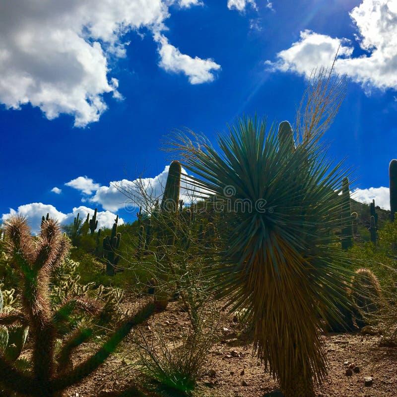 Arizona royalty free stock images
