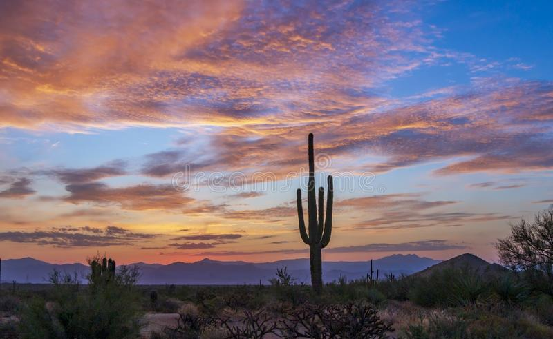 Arizona Desert Sunrise With Cactus & Purple Mountains royalty free stock image