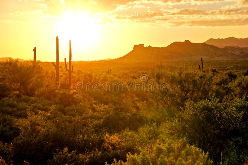 Arizona desert sunset. Sunset view of the Arizona desert with cacti and mountains royalty free stock photography
