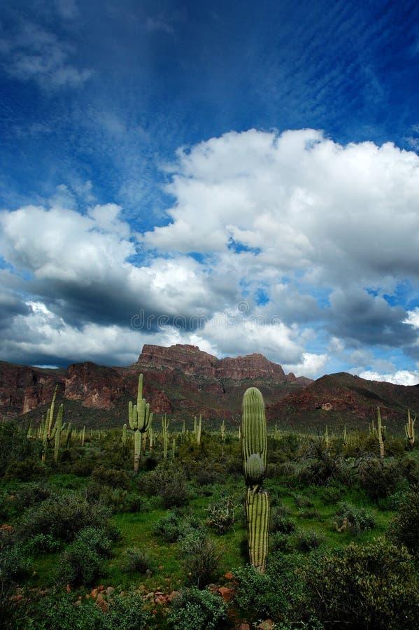 Arizona Desert Superstition Mountains with Cacti and Clouds. Arizona Desert Superstition Mountains wilderness with cactus cacti and clouds royalty free stock photos