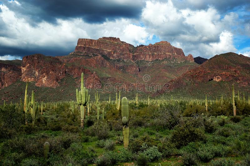 Arizona Desert Superstition Mountains with Cacti and Clouds royalty free stock images