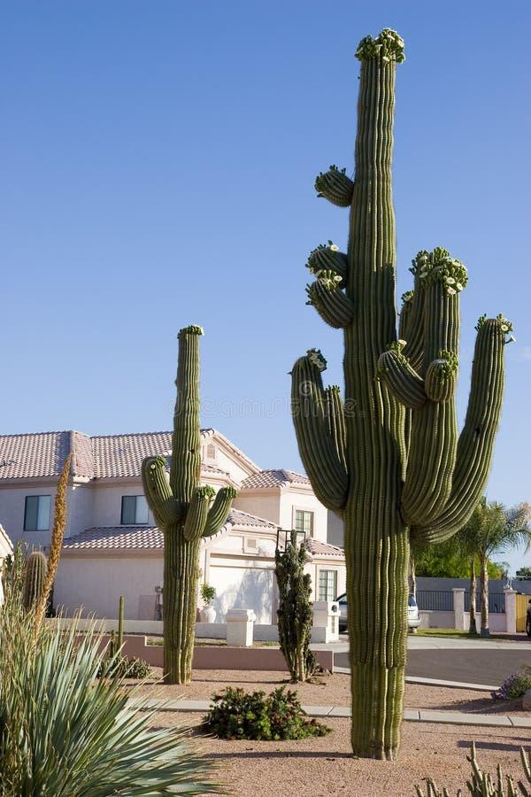 Arizona Home and Saguaro stock photography