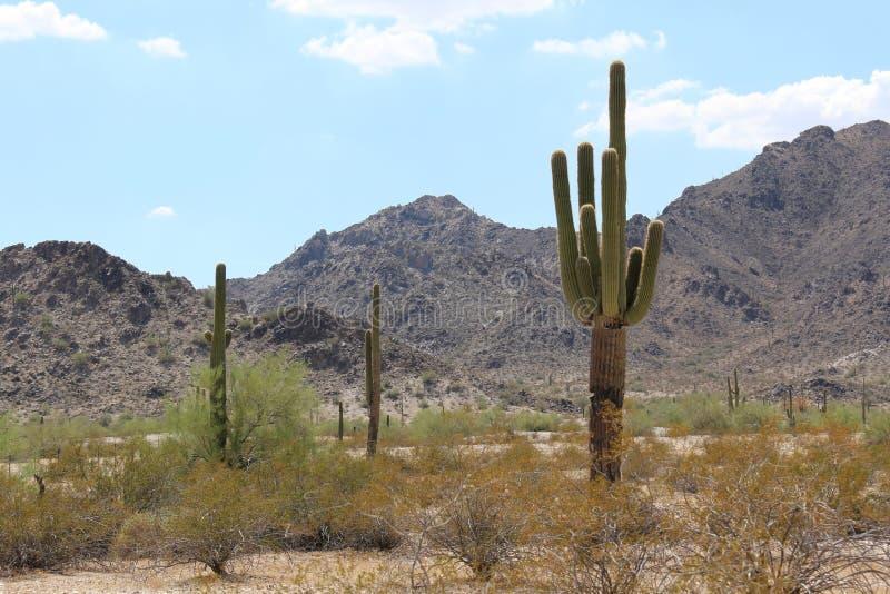 Arizona-Landschaft mit Saguaro-Kaktus lizenzfreies stockfoto