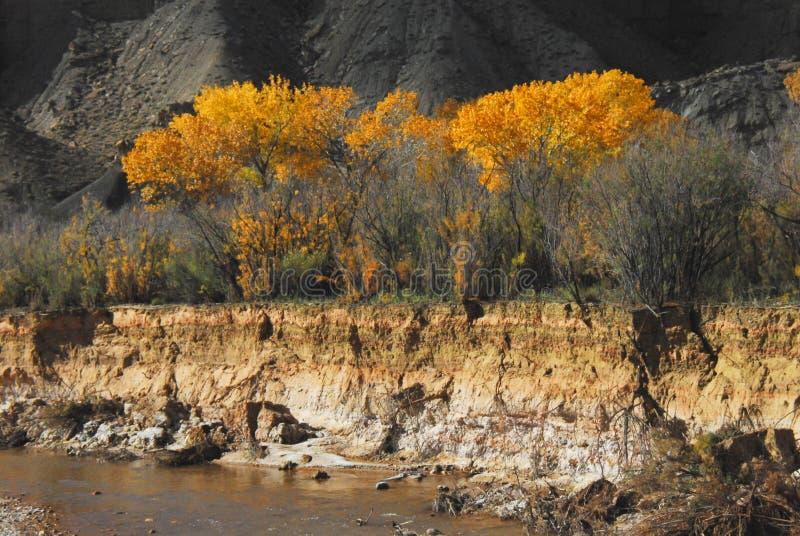 Arizona Mooi Autumn Landscape in de Woestijn stock foto's