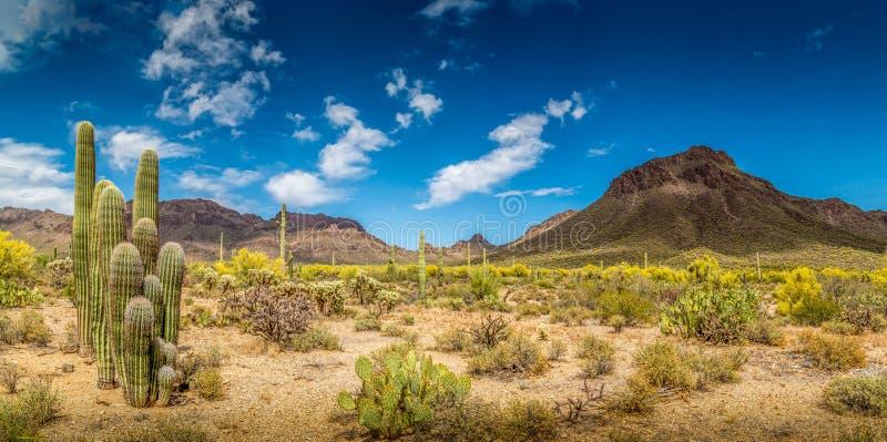 Arizona mountain desert landscape stock photo image of for Fishing license az price