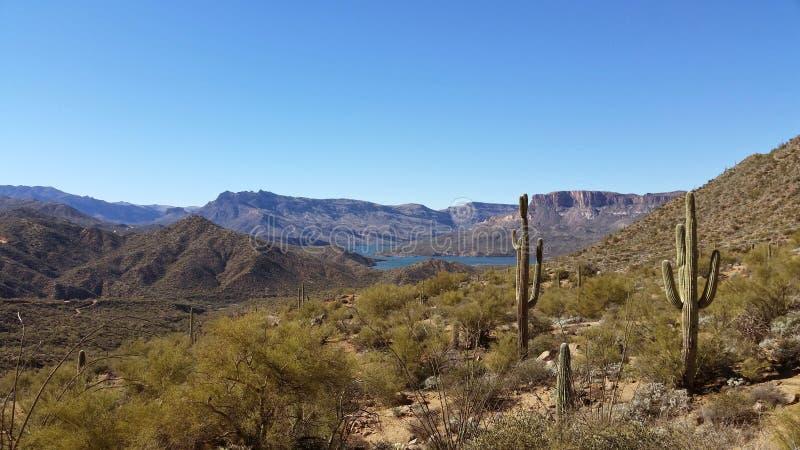 Arizona mountains and cactus royalty free stock photo