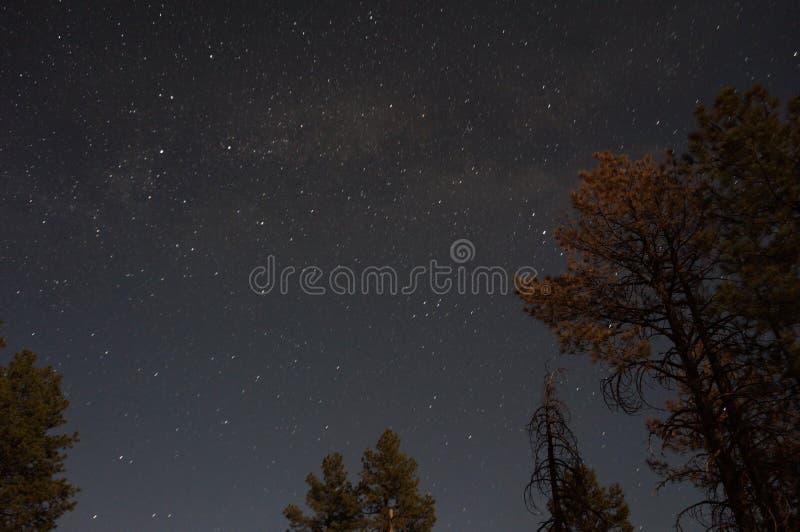 Arizona-nächtlicher Himmel stockfotos