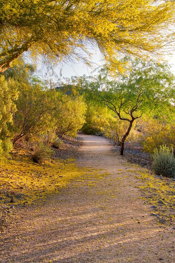 Arizona Palo Verde Tree in der Blüte lizenzfreie stockfotografie