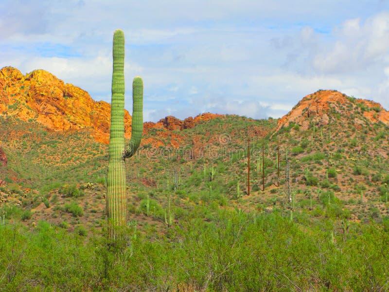 Arizona perdió el parque del remiendo foto de archivo libre de regalías