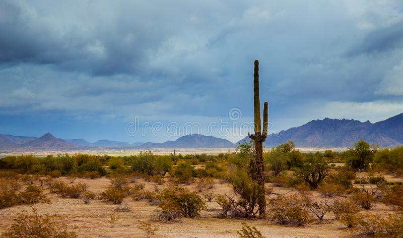 Arizona pustyni panoramy krajobraz w saguaro kaktusie obraz stock