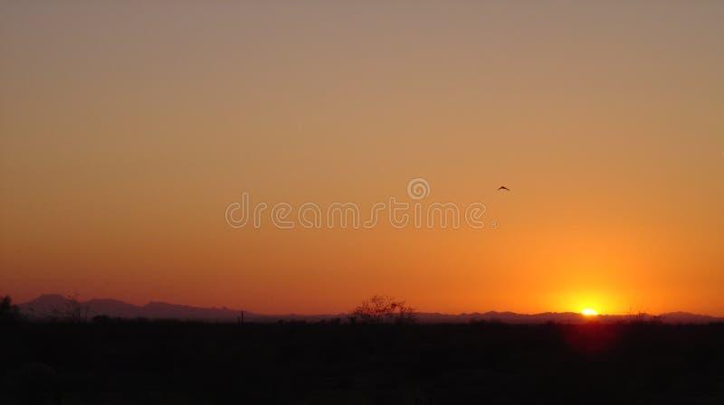 Arizona skurar badat i Guling-apelsin solnedgång royaltyfri bild