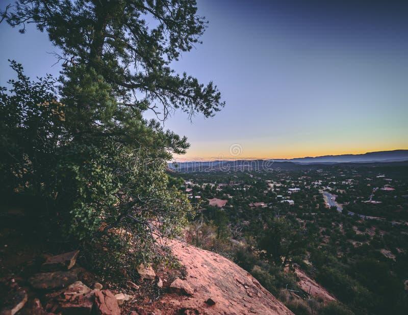 Arizona-Sonnenuntergangbaum-Landschaftsnatur lizenzfreie stockfotografie
