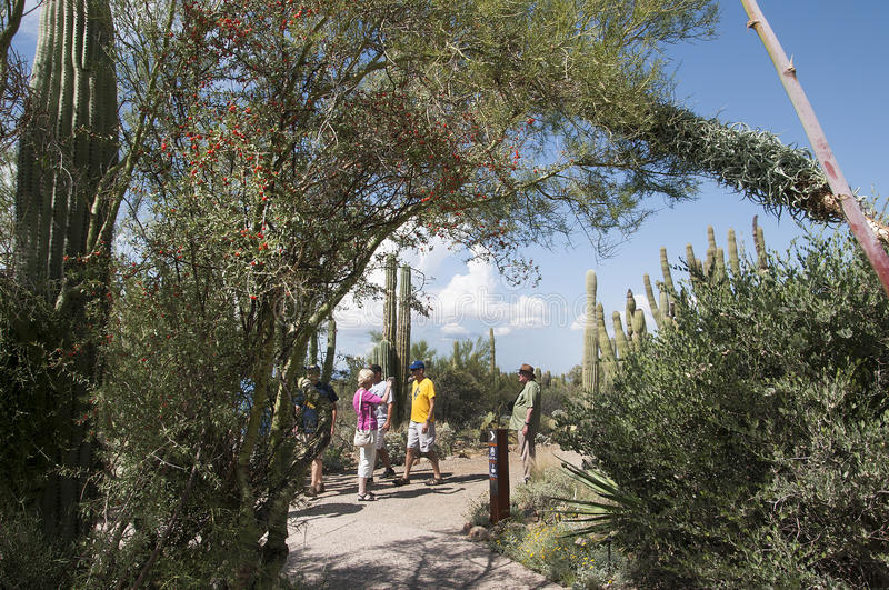 The Arizona Sonora Desert Museum South of Phoenix Arizona USA. The Flora and Fauna of the Arizona Desert in an open air museum to educate people about the beauty stock images