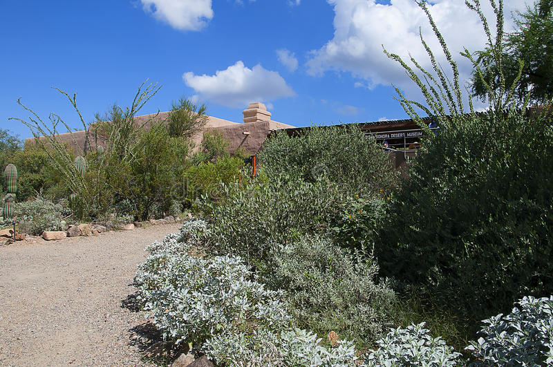 The Arizona Sonora Desert Museum South of Phoenix Arizona USA. The Flora and Fauna of the Arizona Desert in an open air museum to educate people about the beauty royalty free stock photo