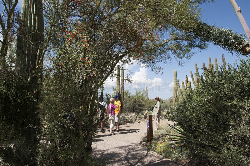 The Arizona Sonora Desert Museum South of Phoenix Arizona USA. The Flora and Fauna of the Arizona Desert in an open air museum to educate people about the beauty royalty free stock photography