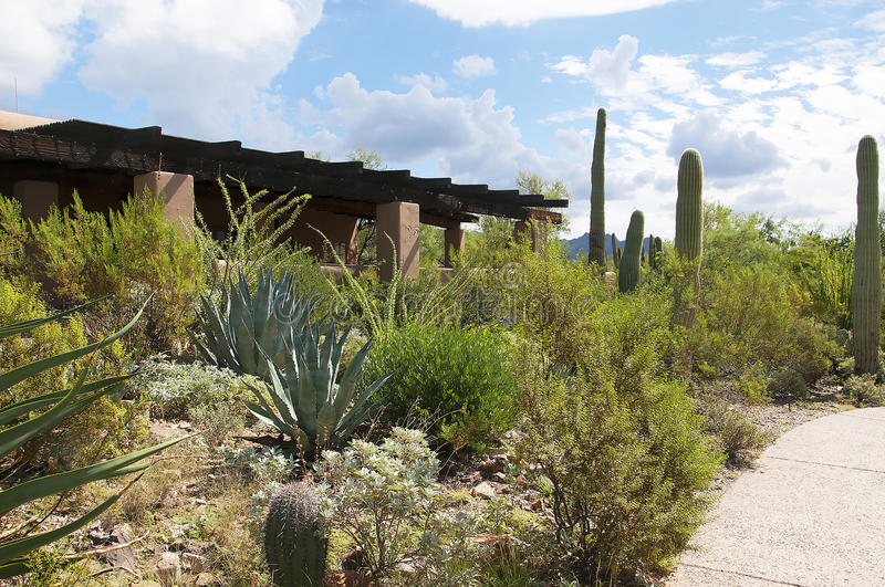 The Arizona Sonora Desert Museum South of Phoenix Arizona USA. The Flora and Fauna of the Arizona Desert in an open air museum to educate people about the beauty stock image