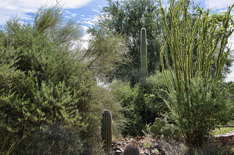 The Arizona Sonora Desert Museum South of Phoenix Arizona USA. The Flora and Fauna of the Arizona Desert in an open air museum to educate people about the beauty royalty free stock image