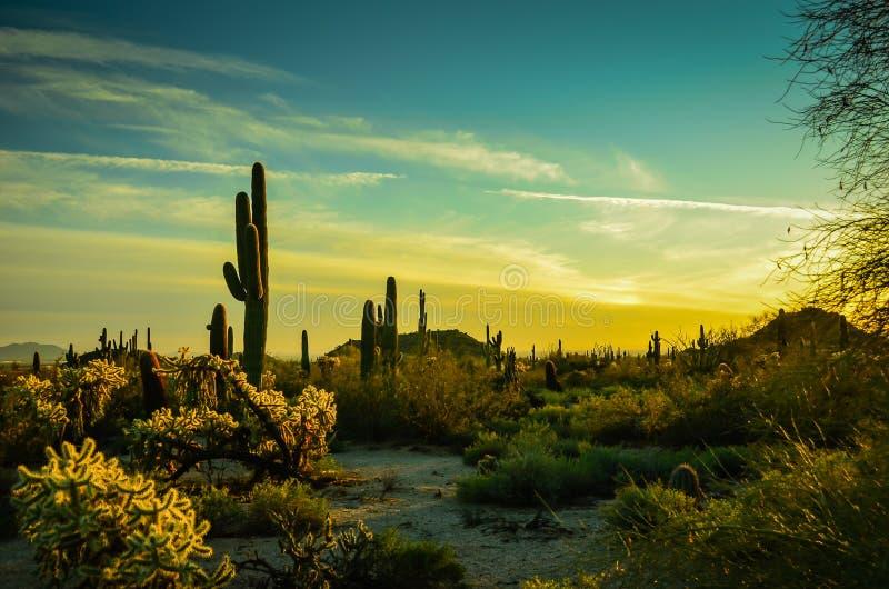 Arizona Sonoran Desert royalty free stock image
