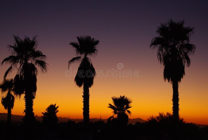 Arizona sunset with palms. Beautiful Arizona sunset with palms stock images