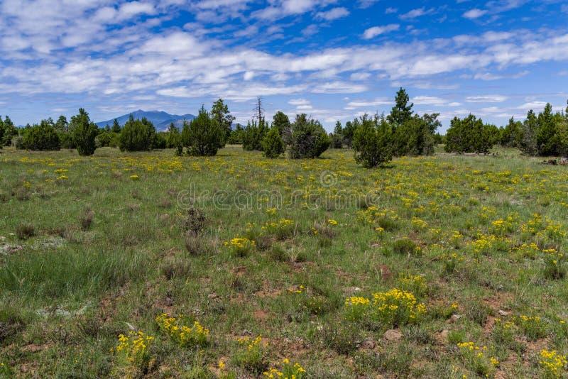 Arizona Trail: Anderson Mesa AZT-30 stock photo