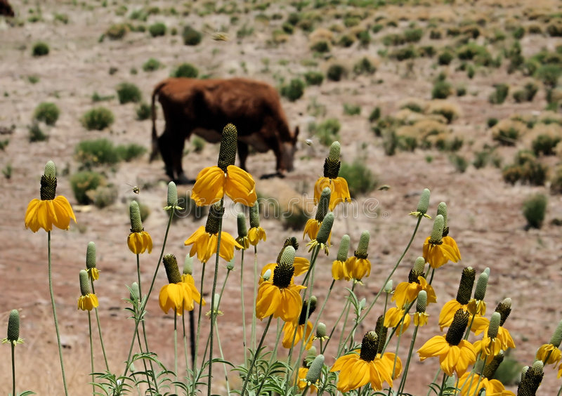 Arizona-Vieh-Ranch stockfotografie