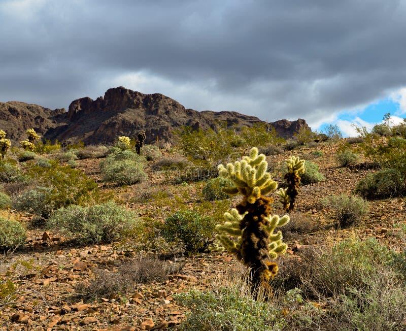 Arizona royalty free stock photos