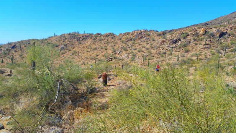 Arizona-Wüsten-Landschaft stockbilder