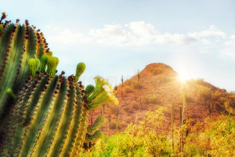 Arizona-Wüsten-Szene mit Berg und Kaktus stockbild