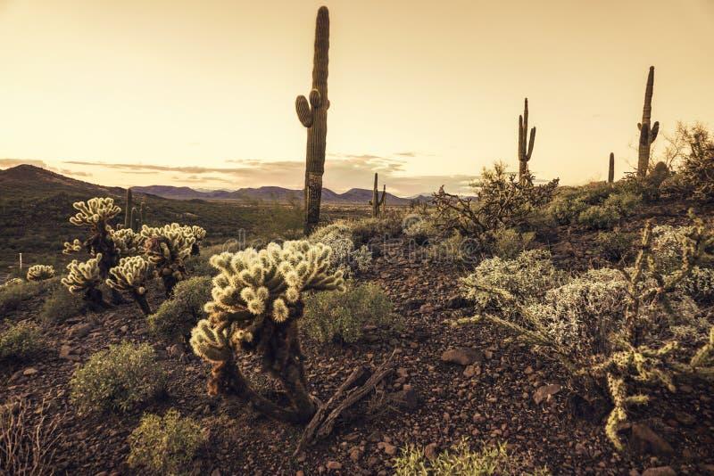 Arizona-Wüstenkaktus-Baumlandschaft lizenzfreies stockbild
