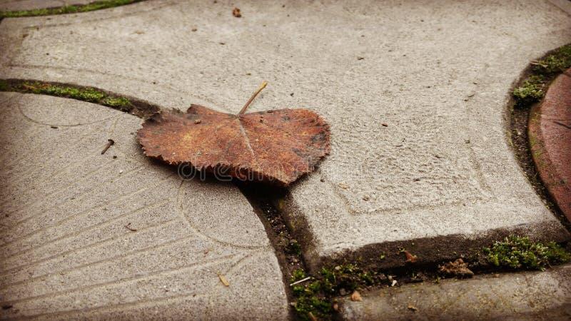 Ark av asfalt royaltyfri foto