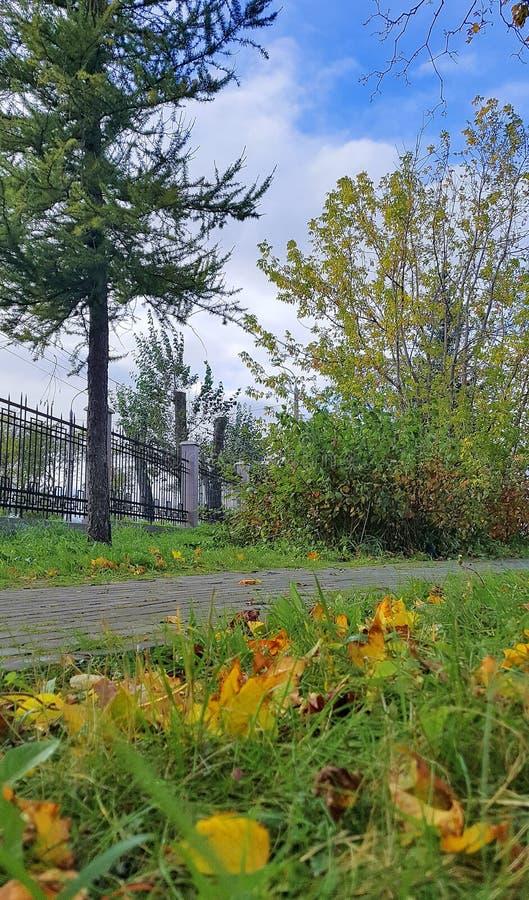 arkansan Φθινόπωρο στο πάρκο πόλεων φύλλα σφενδάμου στη χλόη στοκ φωτογραφίες με δικαίωμα ελεύθερης χρήσης