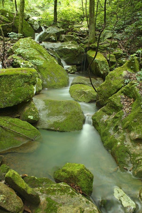 Arkansas fridsam mossig grön vattenfall arkivbilder