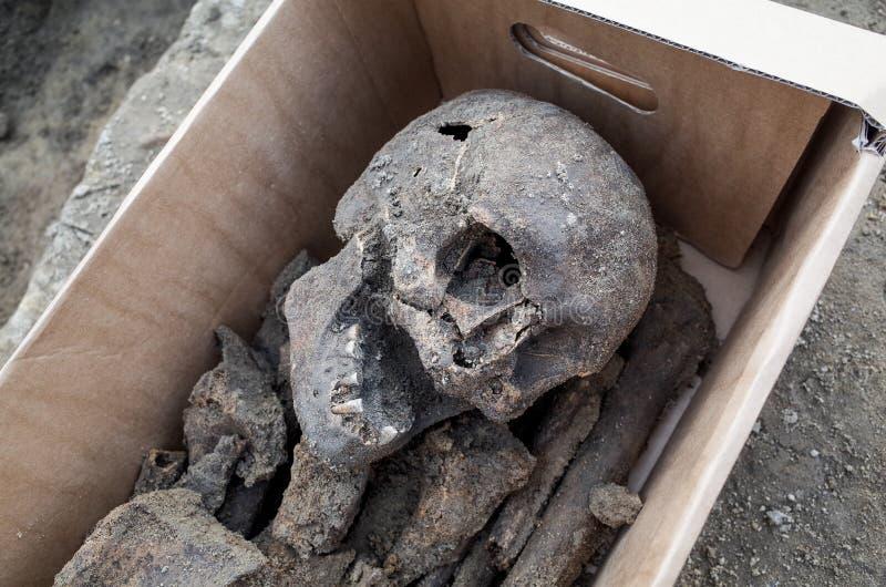 Arkeologisk utgrävning med skelett royaltyfria bilder