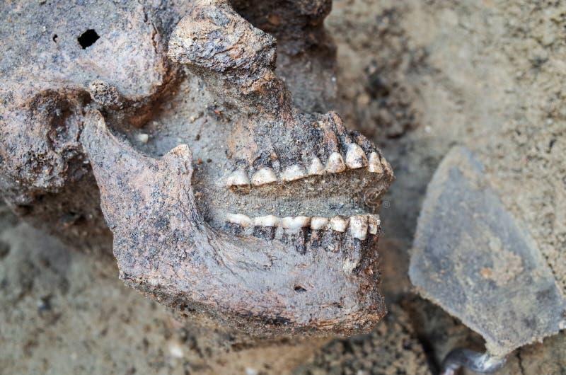Arkeologisk utgrävning med skelett arkivbild