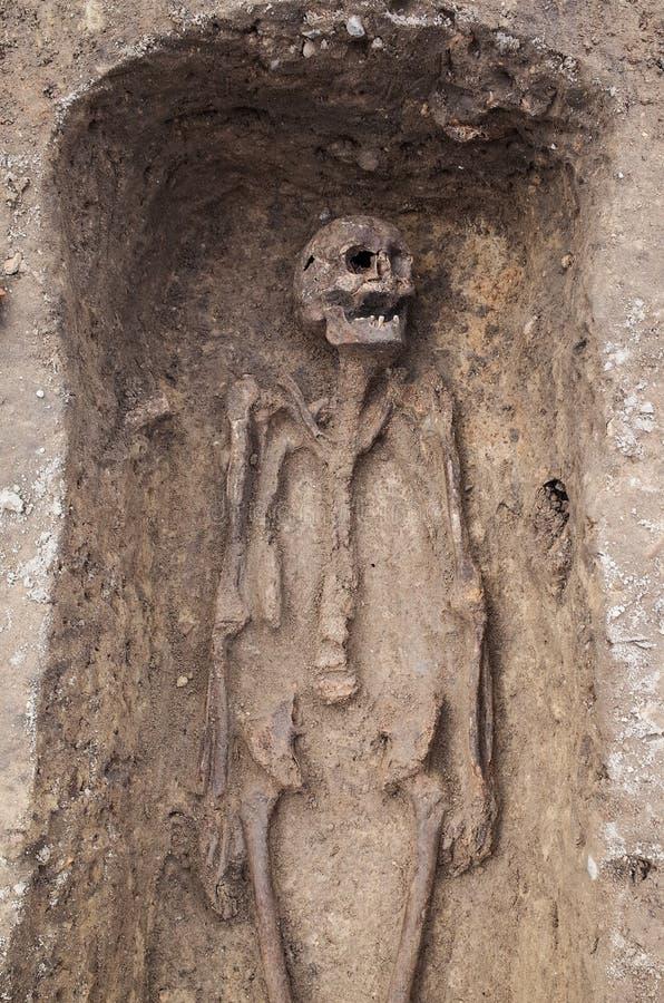 Arkeologisk utgrävning med skelett arkivfoton