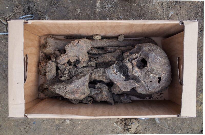 Arkeologisk utgrävning med skelett arkivfoto