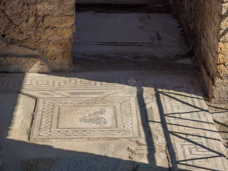 Arkeologiskt parkera av Baia, mosaikgolv fotografering för bildbyråer