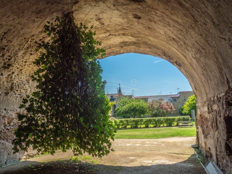 Arkeologiskt parkera av Baia, uppochnervänd fikonträd royaltyfri foto