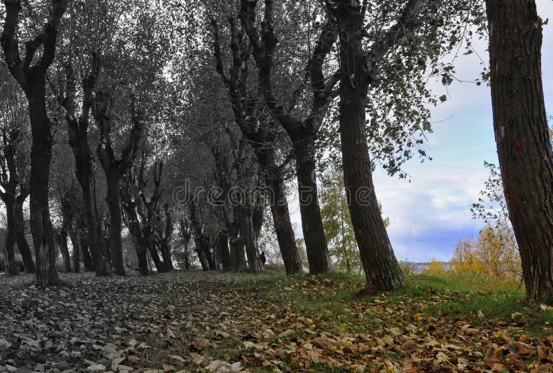 arkhangelsk Jour d'automne sur la banque de la rivière du nord de Dvina photo stock