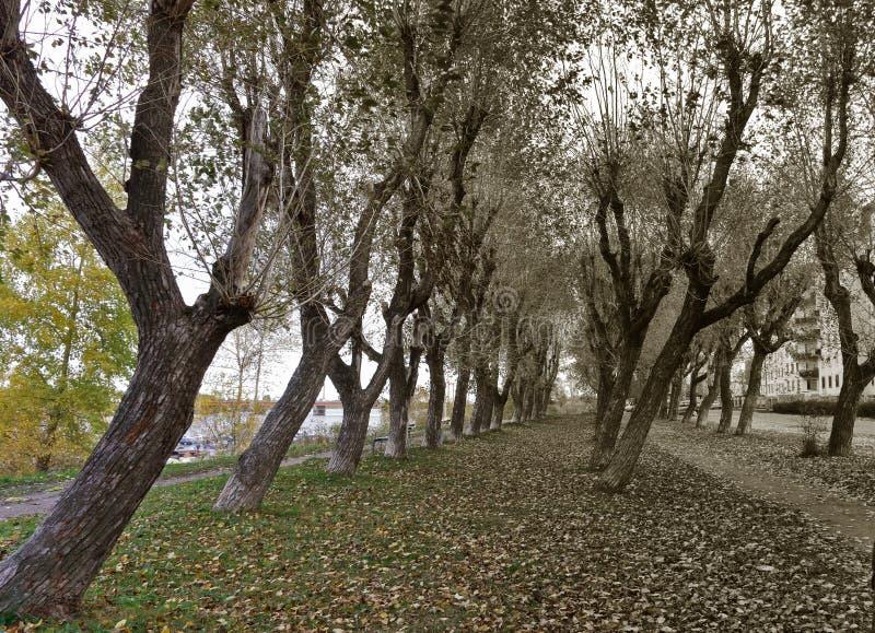 arkhangelsk Jour d'automne sur la banque de la rivière du nord de Dvina photos libres de droits