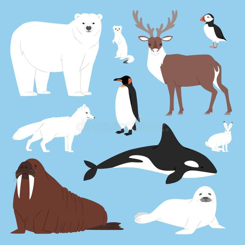 Arktische Tierkarikaturvektoreisbär- oder -Pinguincharaktersammlung mit Walren und -dichtung im verschneiten Winter stock abbildung