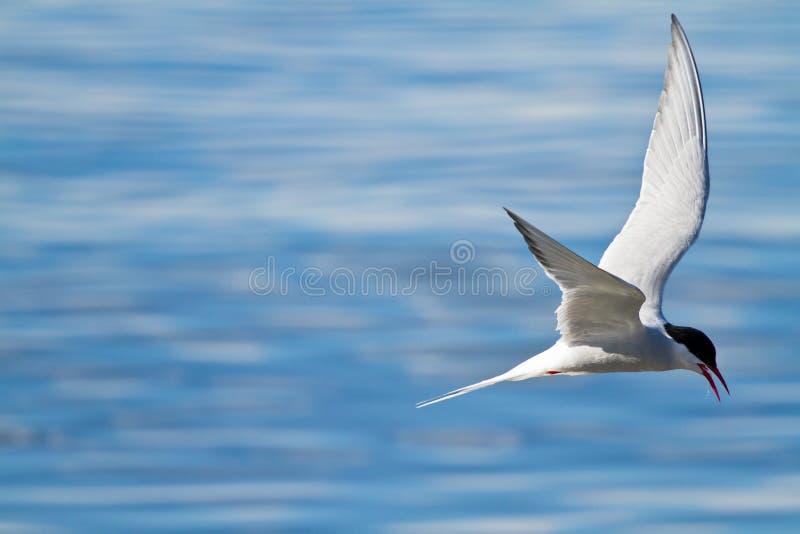 Arktisches strenges Fischen lizenzfreie stockfotografie