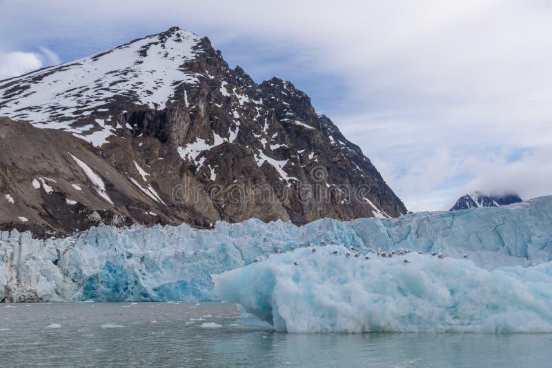 Arktisk landskapglaciär som halkar in i fjärden på den Spitsbergen skärgården fotografering för bildbyråer