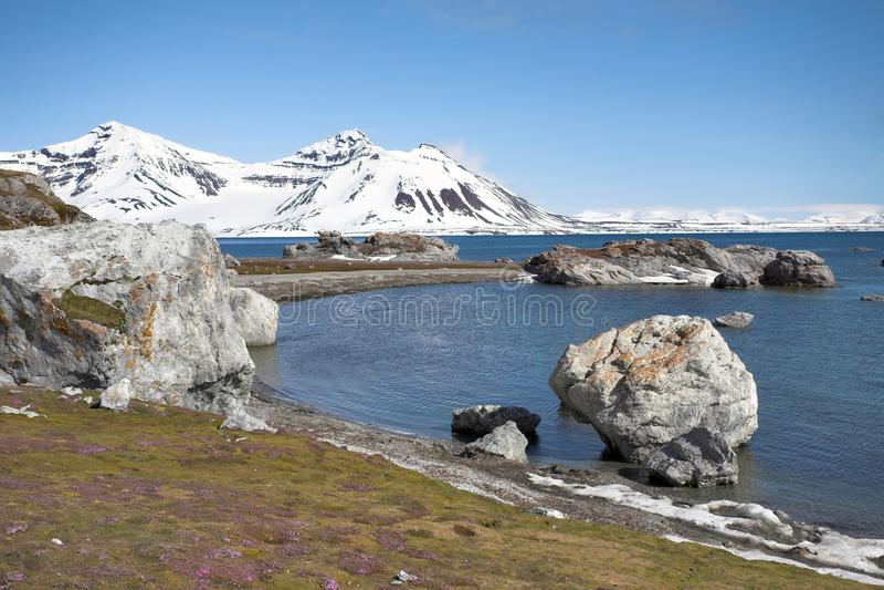 arktisk liggandesommar royaltyfri foto