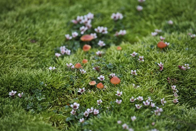 Arktisk mossa, blommor och champinjoner arkivbilder