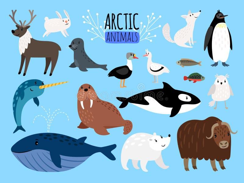 arktiska djur Gullig djuruppsättning av arktisk- eller Alaska vektorillustration för utbildning, pingvin och isbjörn stock illustrationer